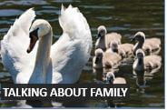 Talking about family in beginner level English