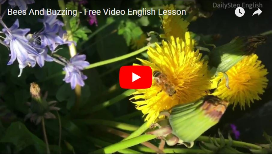 How To Describe Bees And Their Noise - Free Video English Lesson